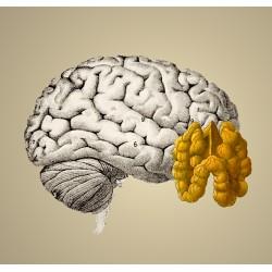 Neurones & mémoire : viser l'optimum